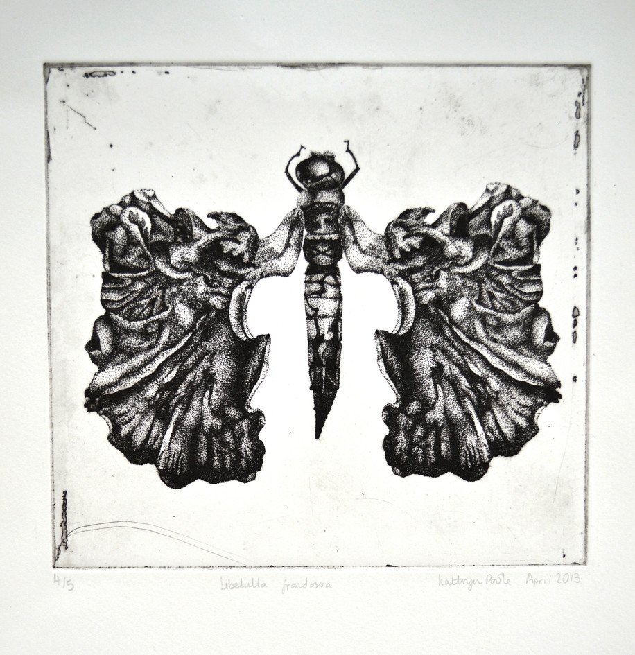 Libelulla frondossa, photopolymer print, 2013