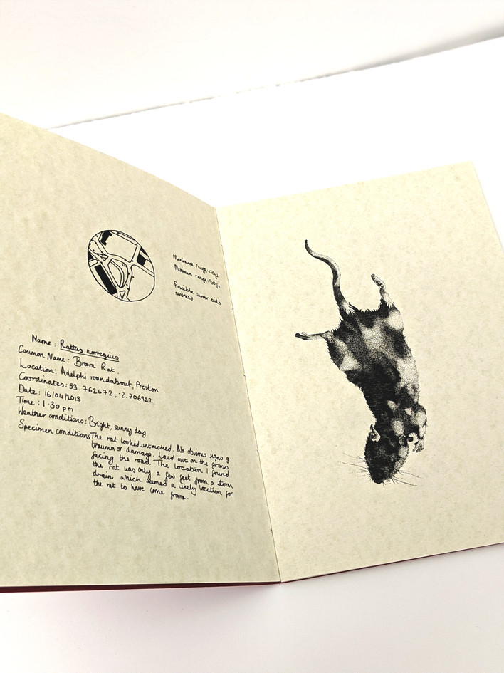 Pests zine, digital print, edition of 50, 2015