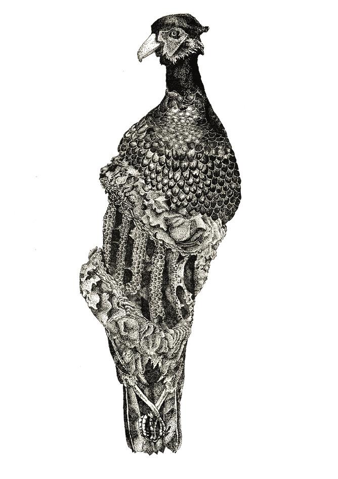 Phasianus corax, stone lithograph, 2014