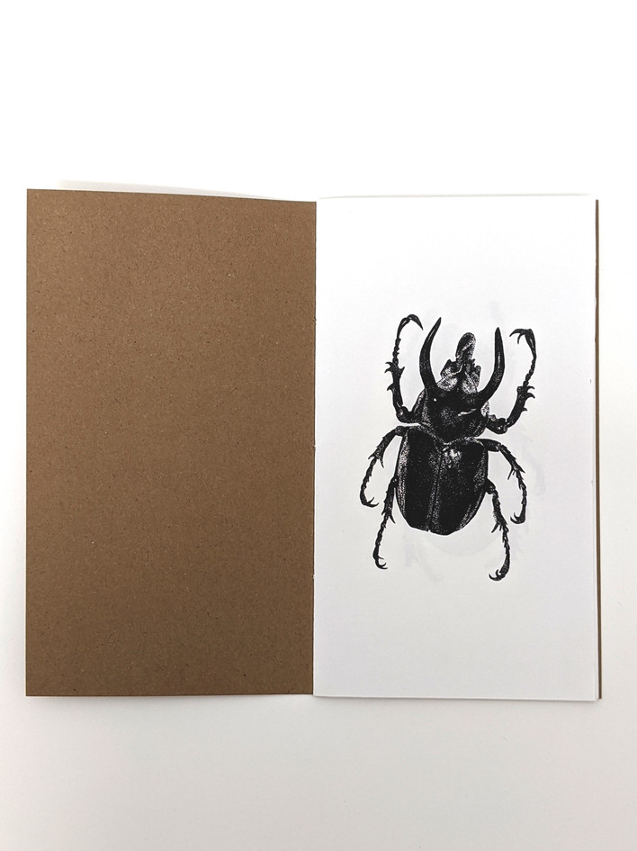Beetles zine, digitally printed book, edition of 30, 2019