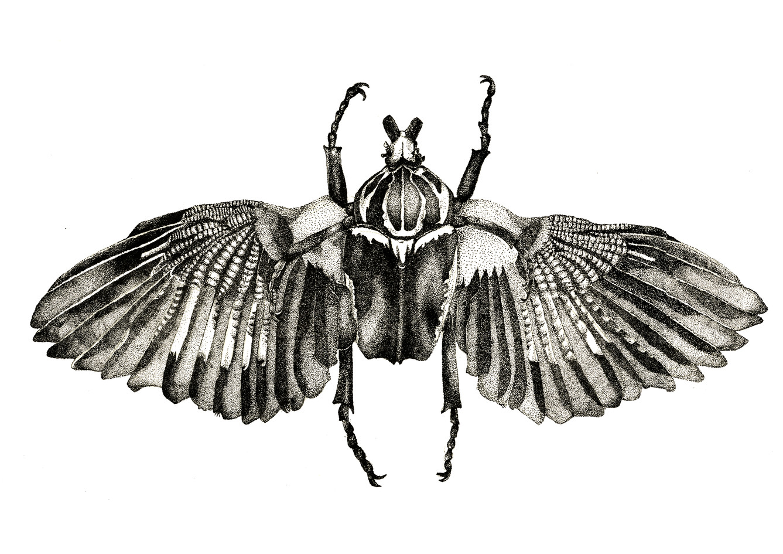 Goliathus glandarius, stone lithograph, 2014