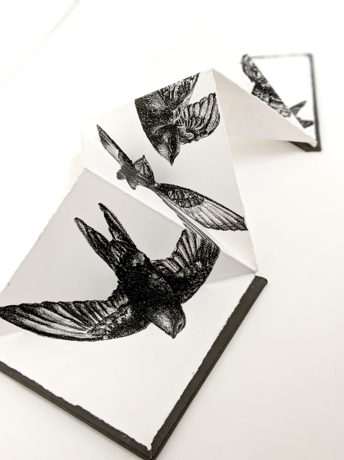Swifts, stone lithograph, edition of 30, 2019