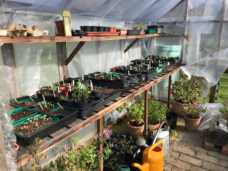 RHS Launches 'Grow at Home' Campaign