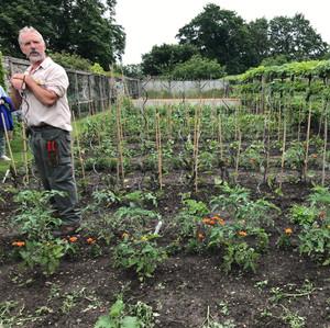 Fittleworth Kitchen Garden June 2021