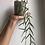 """Thumbnail: Hoya Linearis in 3"""" concrete planter"""