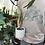 """Thumbnail: Alocasia sarian in 5"""" concrete planter"""