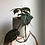 "Thumbnail: Philodendron micans in 5"" concrete pot"