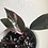 """Thumbnail: Philodendron Pink Princess in 4.5"""" concrete planter with saucer"""