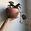 "Thumbnail: Philodendron Micans in 6"" Round ceramic planter"