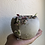 """Thumbnail: Variegated String of hearts in 3.5"""" concrete pot"""