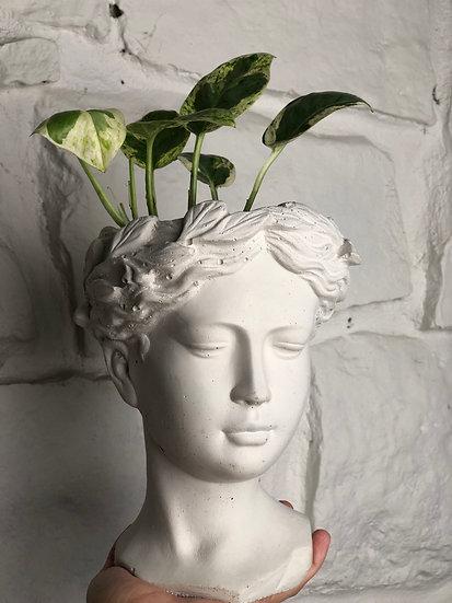 Pothos N'Joy in Medium Cement Goddess Planter