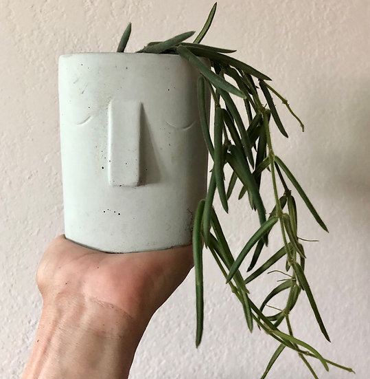 """E  Stassney Pickup: Hoya Linearis in 3.5"""" minty face planter with tray"""