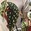 "Thumbnail: Begonia maculata in 6"" concrete planter"