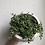 "Thumbnail: String of turtles in 5"" tribal concrete planter"