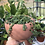 """Thumbnail: String of turtles in 6"""" marble round ceramic planter"""