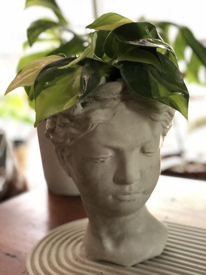 "Philodendron brasil in 9"" tall Goddess planter"