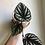 """Thumbnail: Cissus discolor in 4.5"""" concrete planter"""