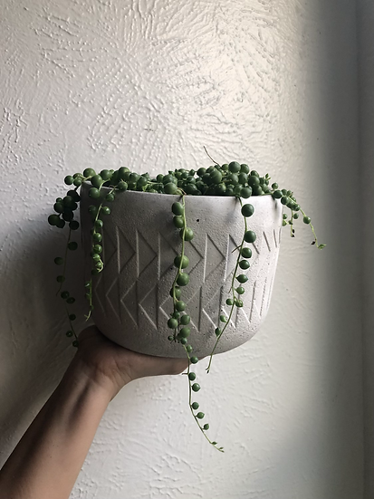 """String of pearls in 6"""" concrete tribal pot"""