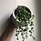 """Thumbnail: String of pearls in 5"""" concrete tribal planter"""