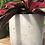 """Thumbnail: Calathea Triostar in 7"""" concrete planter"""