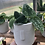 "Thumbnail: Satin Pothos in 4"" concrete face planter"