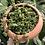 "Thumbnail: Mueller Pick-up: String of turtles in 6"" ceramic planter"