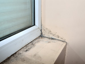 How to solve mold issue ?