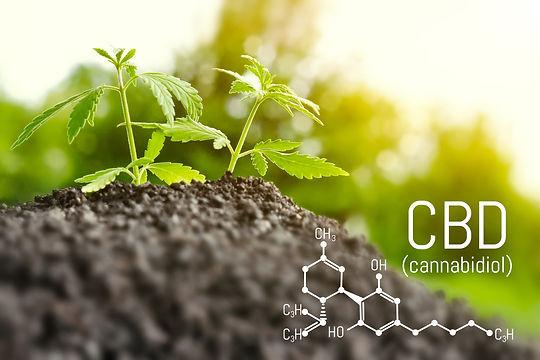 Canva - Growing natural marijuana with s