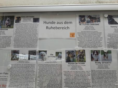 #17: In Falkenberg liegt der Hund begraben