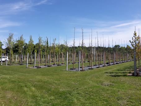 #5: Baum-, Baum-, Baumschulenweg