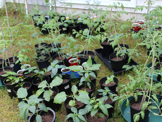 Garden Journey 2016, Part 3