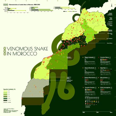 Venomous Snake in Morocco