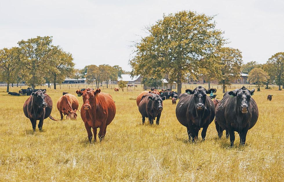 breedingstock3.jpg