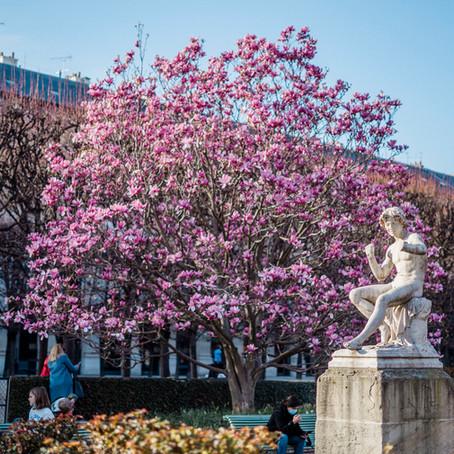Best Places For Magnolia In Paris