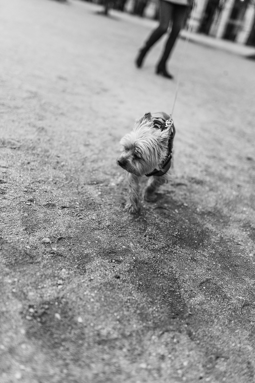 paris-photography-black-and-white-a-dog