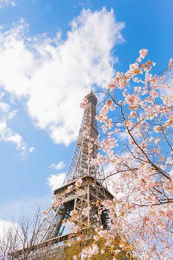 Hoa-dao-thap-Eiffel.jpg