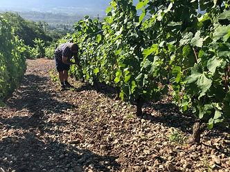 Vins de Savoie, Mondeuse, Mondeuse Arbin