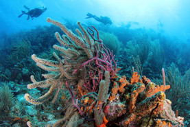 Curacao, a World Class Dive, Snorkel and Vacation Destination in the Heart of the Dutch Caribbean