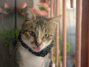 猫とアロマテラピー:2
