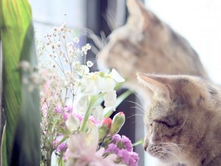 猫とアロマテラピー:1