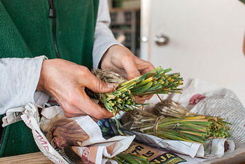 Front_Field_Farm__onion_sets__credit_And