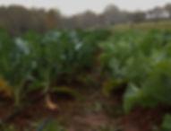 sundancefarm.jpg