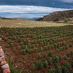 Île d'Amantaní, Lac Titicaca