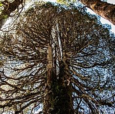 Parc national Llanquihue, Région des Lacs