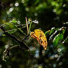 Santa Elena, Monteverde, Costa Rica