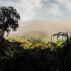 Forêt de nuage, Mindo