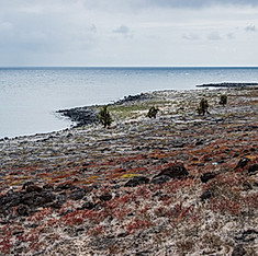 Île Plaza, Galapagos