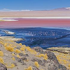 Laguna Colorada, Bolivie