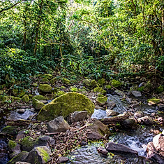 San Luis, Monteverde, Costa Rica