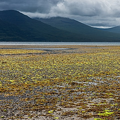 Killiechronan, île de Mull